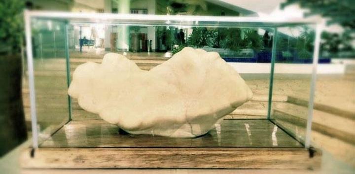 Самая крупная жемчужина в мире