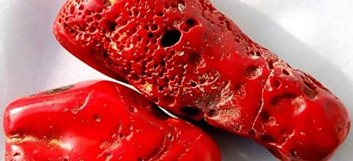 Красный коралл: удивительные свойства камня